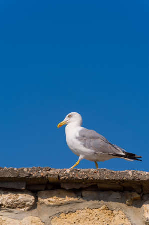 Seagull walking on stones on a background of blue sky