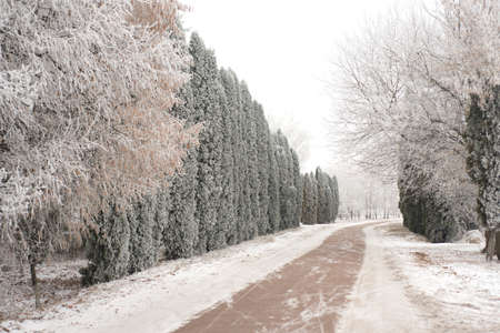 Winter road in the village Stock Photo
