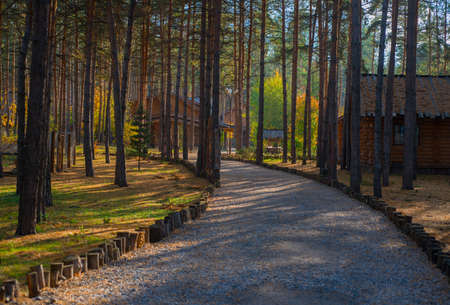 The path and wooden houses in the woods