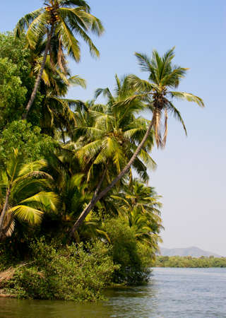 beautiful landscape of palm trees by the lake Goa India