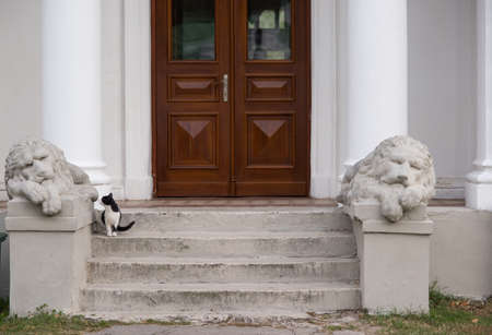 stone lion: Statues of lions and a cat on the building background Stock Photo