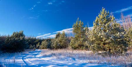 Paesaggio invernale con abeti.