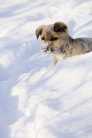 cute dog running in snow