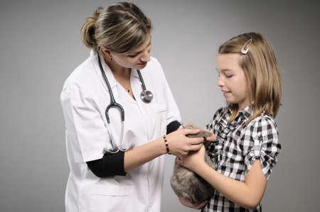 veterinary analyzing baby cat Stock Photo