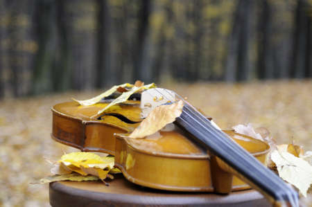 leaves resting on violin Stock Photo - 11277860