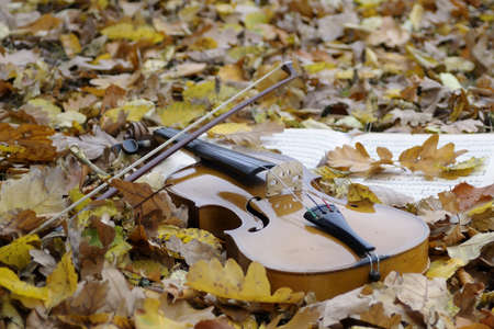 leaves on violin in fall season photo