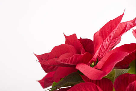 gift with red flower for christmas celebrations