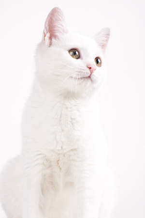white cat studying Stock Photo