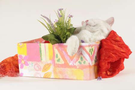 cat sleeping in christmas gift box