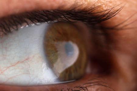 eye ball: bola del ojo humano