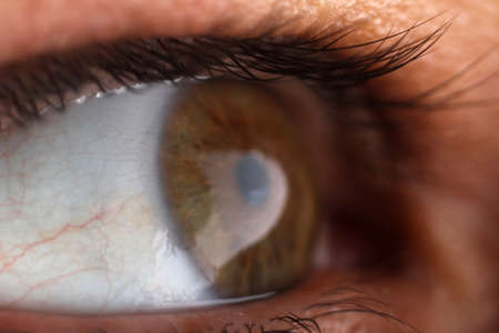 human eye ball photo