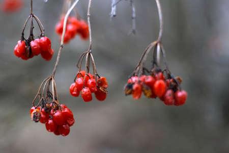 poisoned: red poisoned fruits Stock Photo