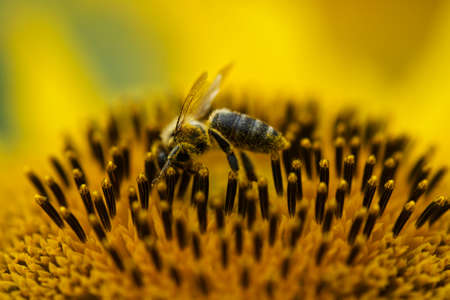 bee picking up nectar form flowers Stock Photo