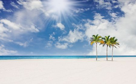 Tropical paradise with palm trees in Miami Florida photo