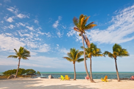 florida landscape: Summer scene with colorful lounge chairs on a tropical beach in Florida with palm tree and blue sky