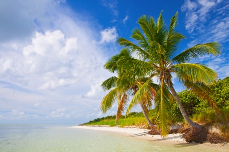 florida landscape: Summer at a tropical paradise in Florida Keys, USA with palm trees, blue sky, clouds and crystal clear water of Atlantic Ocean