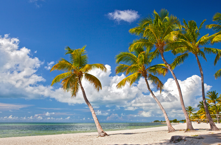 Tropische zomer paradijs in Miami Beach Florida met palmbomen en de oceaan achtergrond Stockfoto