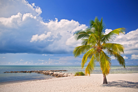 Summer at a tropical paradise in Florida Key West, USA with palm trees, blue sky, clouds and crystal clear water of Atlantic Ocean