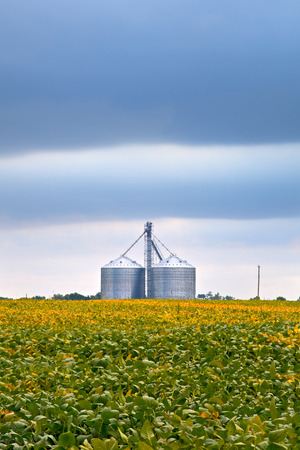 Agriculture industry with soybean fields and silo on cloudy day in Midwest USA Stock Photo