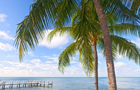 clave sol: Las palmeras, mar y cielo azul en una playa tropical en Cayos de Florida cerca de famoso destino turístico de Cayo Hueso