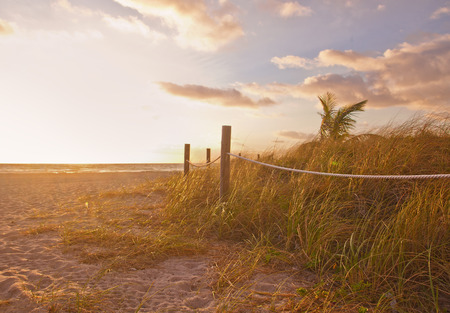 sea oats: Path to the beach with Sea Oats, grass dunes at sunrise or sunset in Miami Beach, Florida with palm trees and ocean, beautiful summer tropical  nature landscape Stock Photo