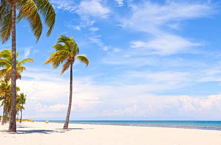 florida landscape: Palm trees on a beautiful sunny summer afternoon in Hollywood Beach near Miami Florida with ocean and blue sky in the background