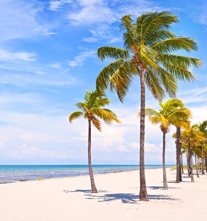 Palmbomen op een mooie zonnige zomermiddag in Miami Beach Florida met oceaan en blauwe hemel op de achtergrond