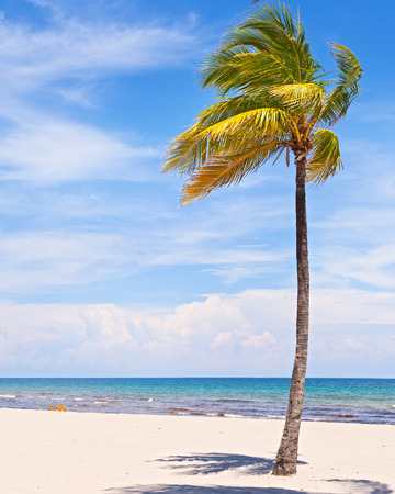 caribbean beach: Palm trees on a beautiful sunny summer afternoon in Miami Beach Florida with ocean and blue sky in the background