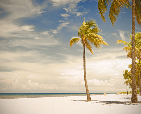 sunny beach: Palm trees on a beautiful sunny summer afternoon in Beach near Miami Florida