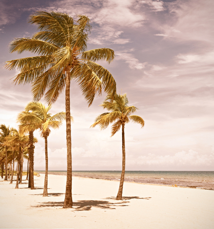 beach landscape: Palm trees on a beautiful sunny summer afternoon in  Beach near Miami Florida