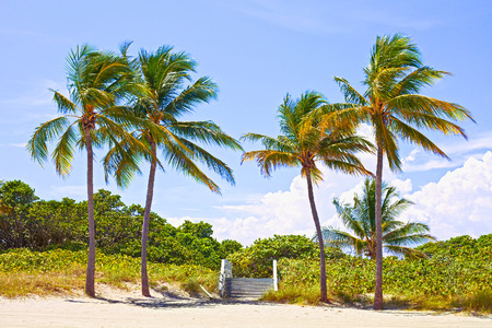 Palm trees and pathway to the sand on a beautiful sunny summer afternoon in  Beach near Miami Florida with ocean and blue sky in the background