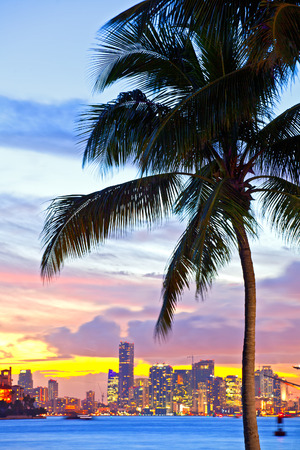 Beautiful sunset over  Downtown and the Port of Miami, beautiful colorful sunset with silhouettes of Palm trees