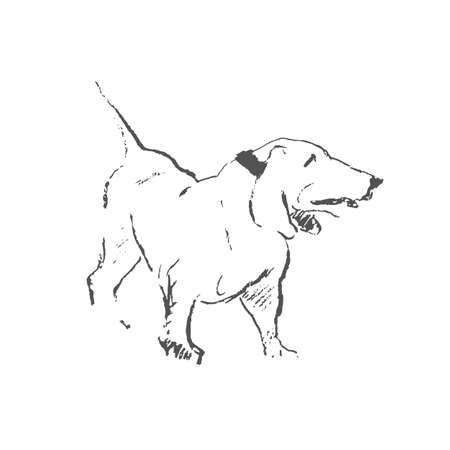 standing in line: Hang line drawing standing dog breed Basset hound Illustration