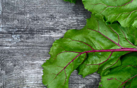 haulm: Wooden vintage background for design with fragment bright green, beautiful beet haulm. Top view