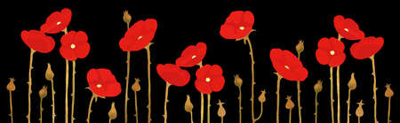 Panorama of blossoming red poppies on black background, vector floral pattern