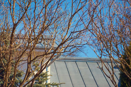 Spring trees branches with swollen buds close-up, spring time background