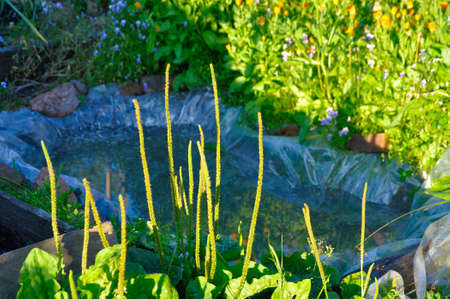Green summer garden and handmade secluded pond