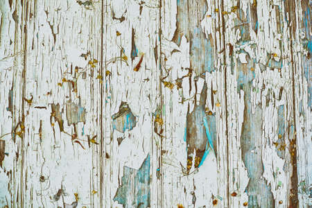 Wood board with faded and cracked paint, dry flowers, vintage background