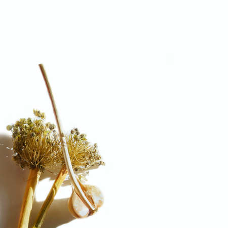 White background with garlic and seeds welsh onion