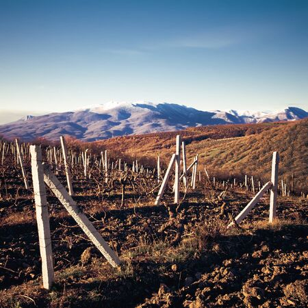 Evening view of the vineyards in Crimea Stock Photo