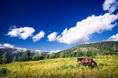 One brown horse grazing on mountain fields Stock Photo