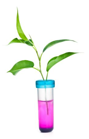 Green plant in chemical tube