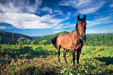 Brown horse grazing on mountain fields