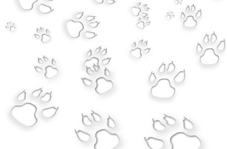 huellas de perro: Las huellas en el fondo blanco