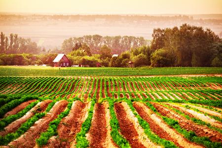 バック グラウンドで家で農業分野