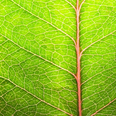 life line: Green leaf texture