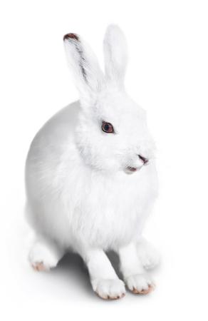 Witte schattige konijn op een witte achtergrond
