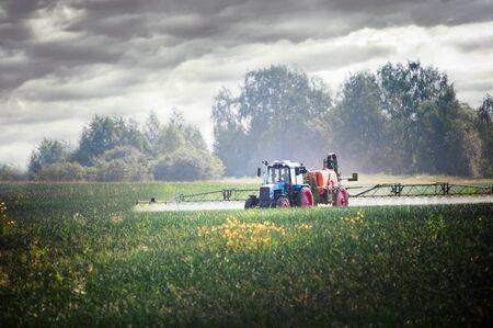 champ de mais: Tractor fertilizes crops in the field