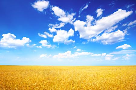 Tarwe veld en de blauwe lucht met wolken