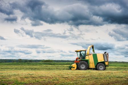 agronomic: Combine harvesting green wheat on field Stock Photo